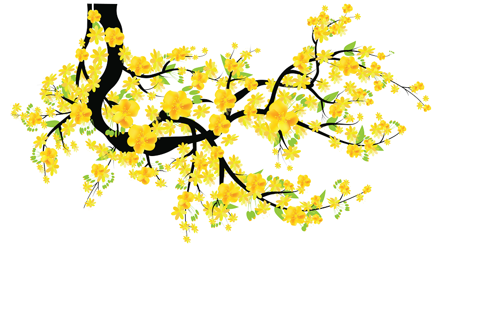 hoa mai clipart