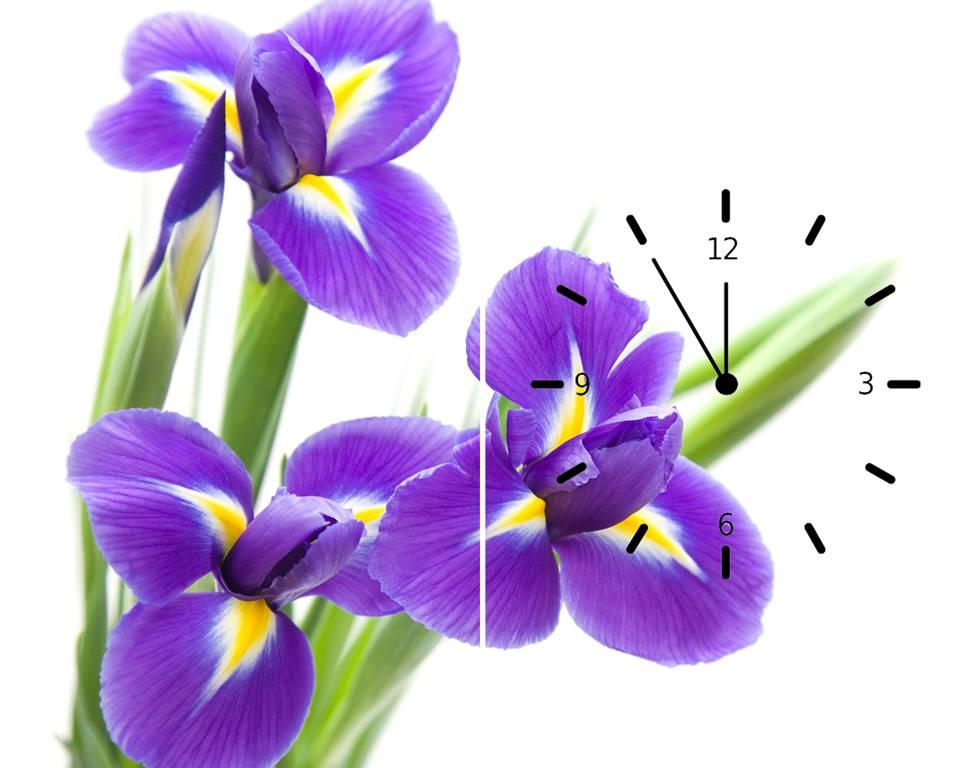 Tranh đồng hồ hoa tím