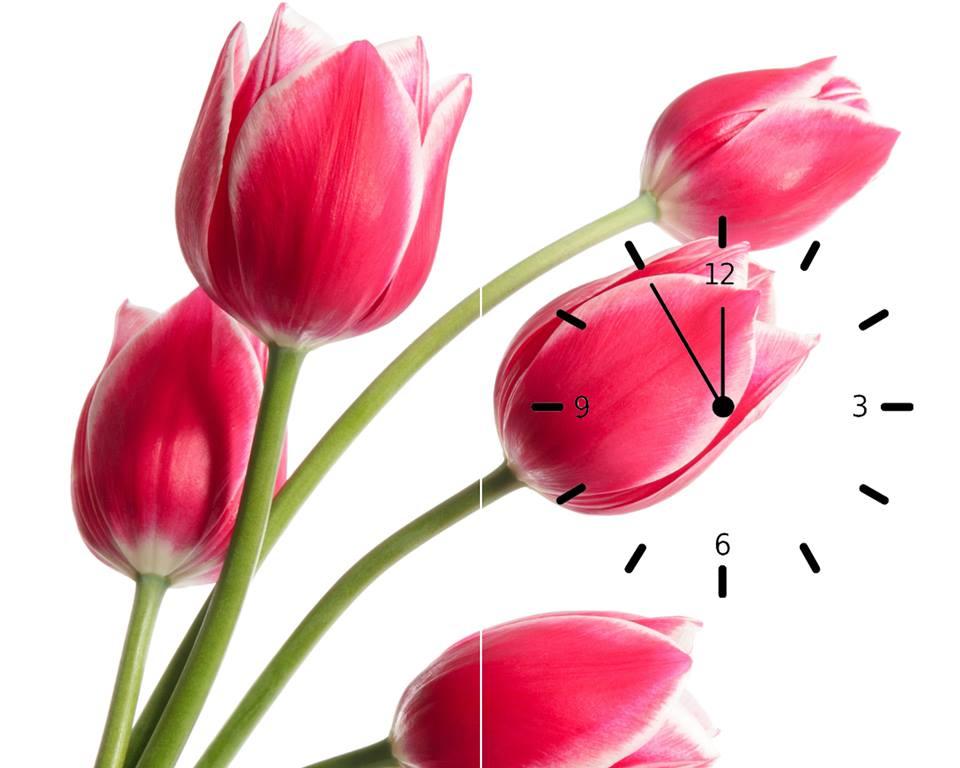 Tranh đồng hồ hoa tulip hồng